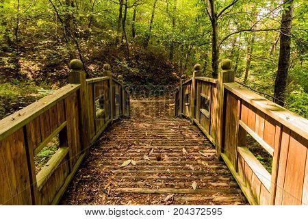 Wooden Foot Bridge In A Woodland Park