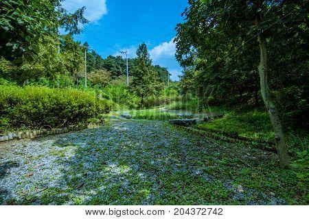 Landscape Of A Woodland Park