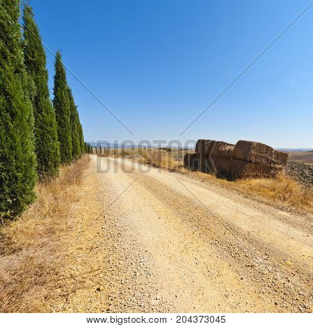 Stubble fields on the hills of Tuscany. Tuscany landscape after harvest. Dirt road lined with cypresses between plowed fields in Italy