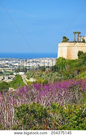 View of part of the city wall with views towards the coast and pretty Spring flowering plants in the foreground Mdina Malta Europe.