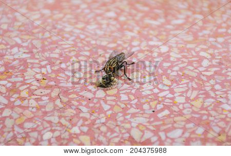 fly on floor. close up Insect. dirty animal of food.