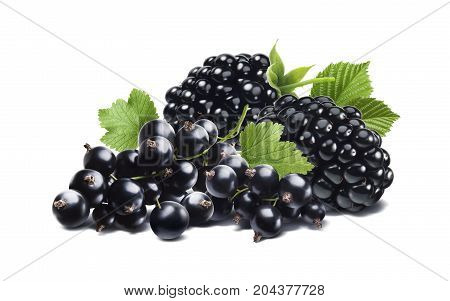 Black berry currant  horizontal composition isolated on white background as package design element