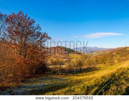 Trees With Red Foliage In Autumnal Countryside