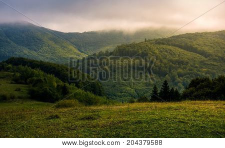 Misty Morning In Green Mountains