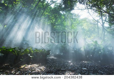 Rainforest Under Jesus Light