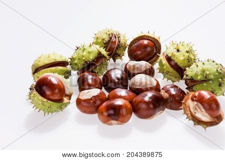 Chestnuts isolated on white, fruits chestnut, Aesculus hippocastanum