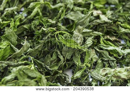 dry dried mint, dried mint in terms of health, put into meal mint pictures