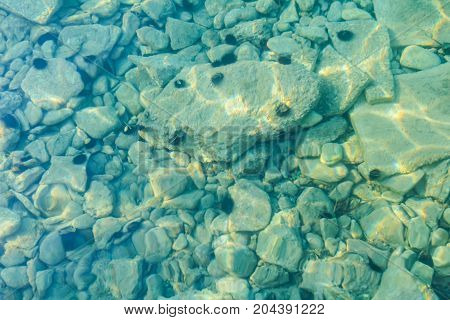 Rocky seafloor visible through turquoise transparent water and black urchin on seafloor.