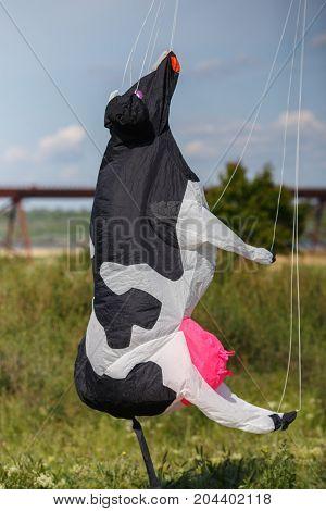 cow air kite landing on the ground on kite festival
