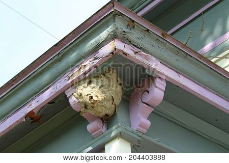 Large paper wasp nest attached to the outside corner eave of an old house, horizontal view