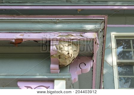 Paper wasp nest attached to the outside corner of a porch roof of an old house, horizontal view