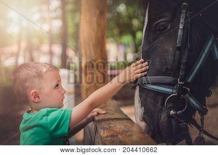 Cute little caucasian boy gently touching the black horse head