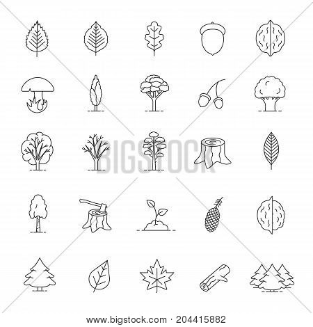 Tree types linear icons set. Forest, park. Forestry. Thin line contour symbols. Isolated vector outline illustrations