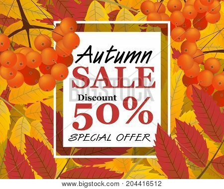 Background with rowan berries leaves and sign autumn sale fall. Vector illustration.