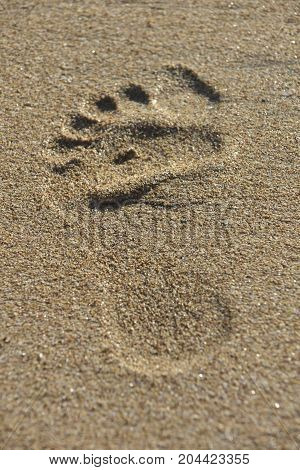 Foot print in the beach sand of Morocco