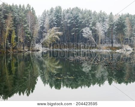 Trees covered with the snow on the shore of the lake