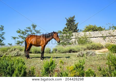 A horse as a tourist attraction standing on Srd hill in Dubrovnik Croatia.
