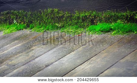 Line of green moss on the edge of old wet wooden plank floor - natural dark background with copy space. Selective focus shallow depth of field.