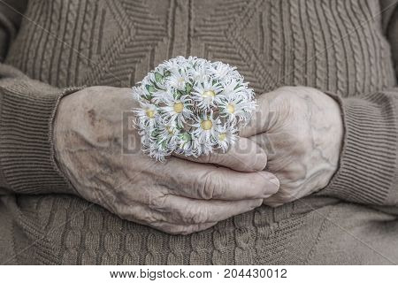 Wrinkled Hand Of A Senior Person Holding Flower