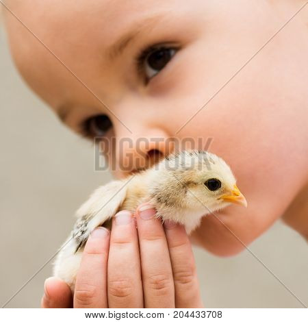 The young child is kissing the little chick. Care about chick.