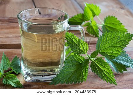 Fresh Nettles With A Cup Of Nettle Tea