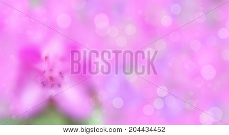 Delicate pink azalea, blurred background with bokeh, soft focus macro. Summer floral template