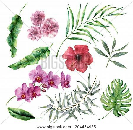 Watercolor tropical set with flowers and leaves. Hand painted palm, monstera, hibiscus, orchid, oleander, eucalyptus, palm branches isolated on white background. Floral iluustration for design, print.