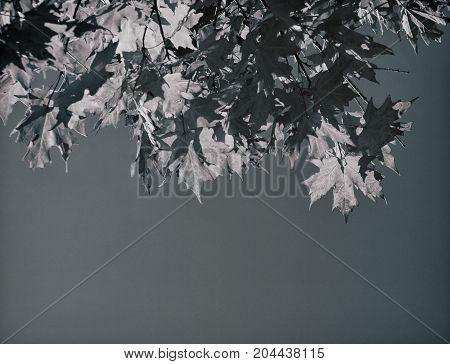 Fall foliage in a nostalgic style, retro look leaves