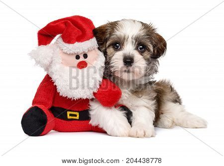 Cute Bichon Havanese puppy dog lying with a little Santa Claus plush toy - Isolated on white background