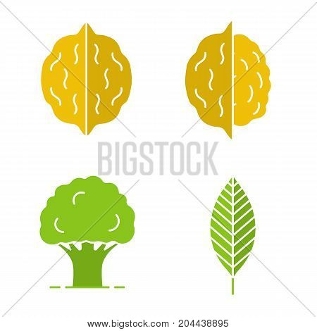 Forestry glyph color icon set. Walnut leaf, oak tree, nuts. Silhouette symbols on white backgrounds. Negative space. Vector illustrations