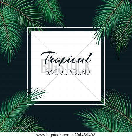Palm Leaf Vector Background  with White Frame Illustration EPS10