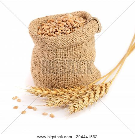 wheat spike and wheat grain in burlap bag isolated on white background.