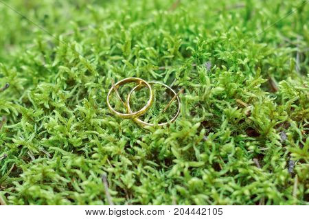Wedding Rings On A Green Moss. Symbol Of Love And Fidelity.