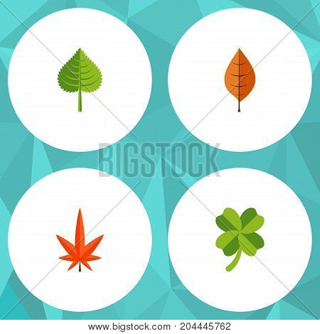 Flat Icon Maple Set Of Foliage, Aspen, Hickory And Other Vector Objects