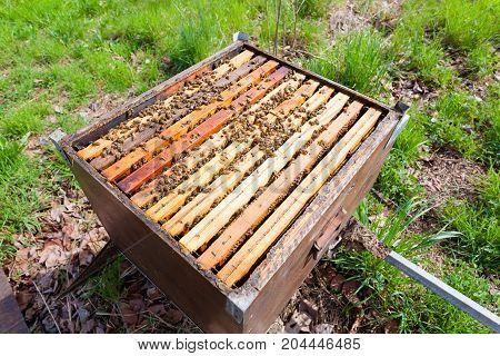 Open Hive, Beekeeping