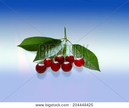 Sweet fresh cherries with green leaves light background, Healthy food.