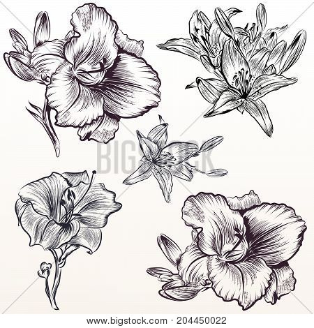 Collection of vector hand drawn flowers victorian style