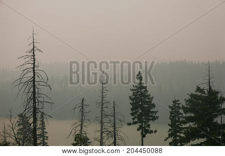 Oregon forest fire aftermath with smoke and dead trees