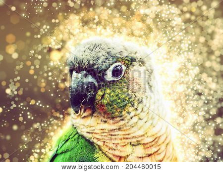 Portrait of beautiful colorful parrot with shimmering background. Bird scene. Yellow photo filter. Beauty in nature.