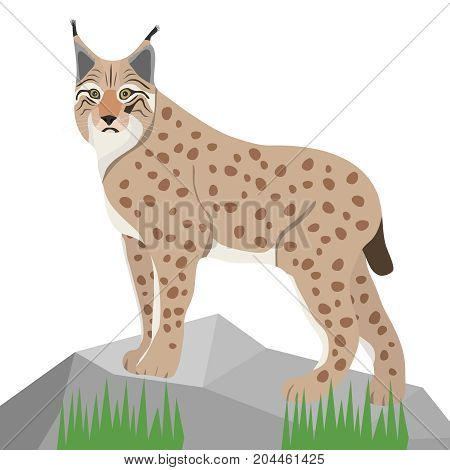 Lynx on white background realistic lynx on stone. Flat design vector illustration vector.