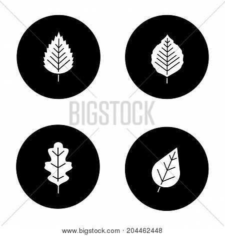 Leaves glyph icons set. Poplar, birch, oak leaves. Vector white silhouettes illustrations in black circles