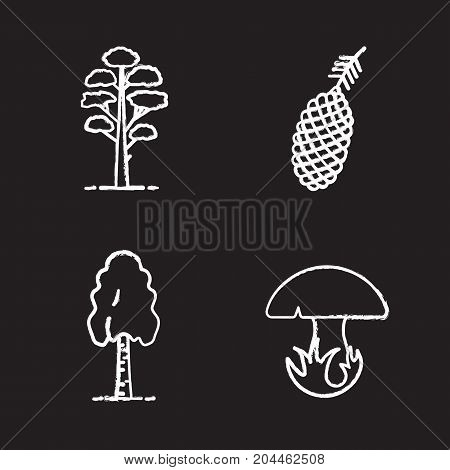 Forestry chalk icons set. Pine cone and tree, birch, mushroom. Isolated vector chalkboard illustrations