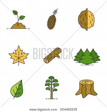 Forestry color icons set. Growing sprout, pine cone and tree, opened walnut, maple leaf, firewood, fir forest, stump. Isolated vector illustrations