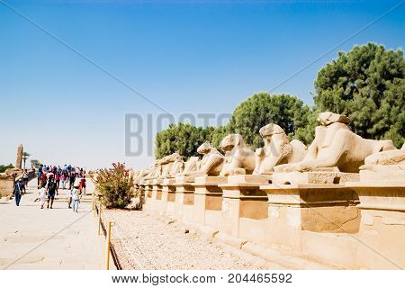 A row of Sphinx statues lining the route into Luxor Temple