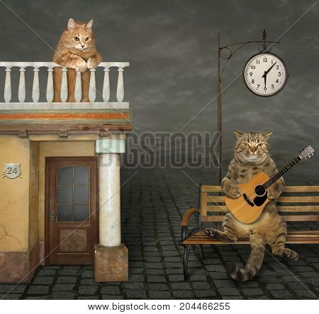 The handsome cat sings a romantic song for his beloved.