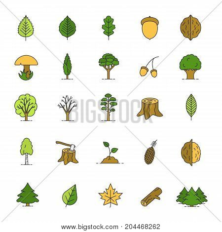 Tree types color icons set. Forest, park. Forestry. Isolated vector illustrations