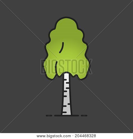 Birch tree color icon. Forestry. Forest tree. Isolated vector illustration