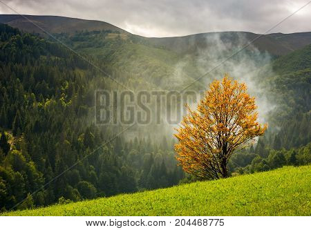 Tree With Yellow Foliage In Foggy Mountains