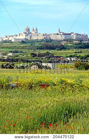 MDINA, MALTA - APRIL 1, 2017 - Pretty Spring fields with views towards the citadel Mdina Malta Europe, April 1, 2017.