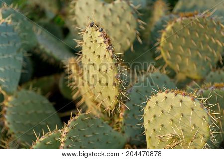 Detail view of cactus plant closeup in warm colors